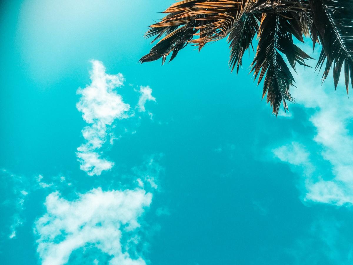 palm tree in dominican republic